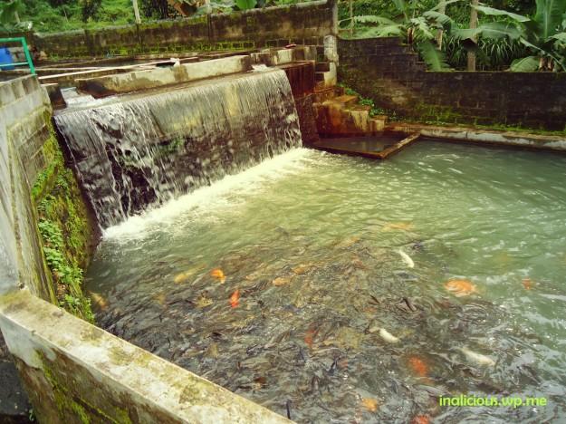 Sungai buatan yang dikapling-kapling jadi kolam ikan