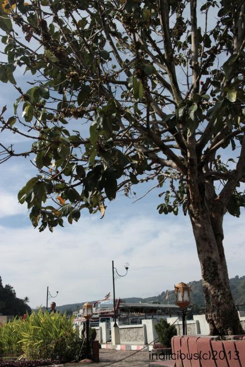Apakah orang Medan lihat pohon seperti orang India di pilem-pilem???
